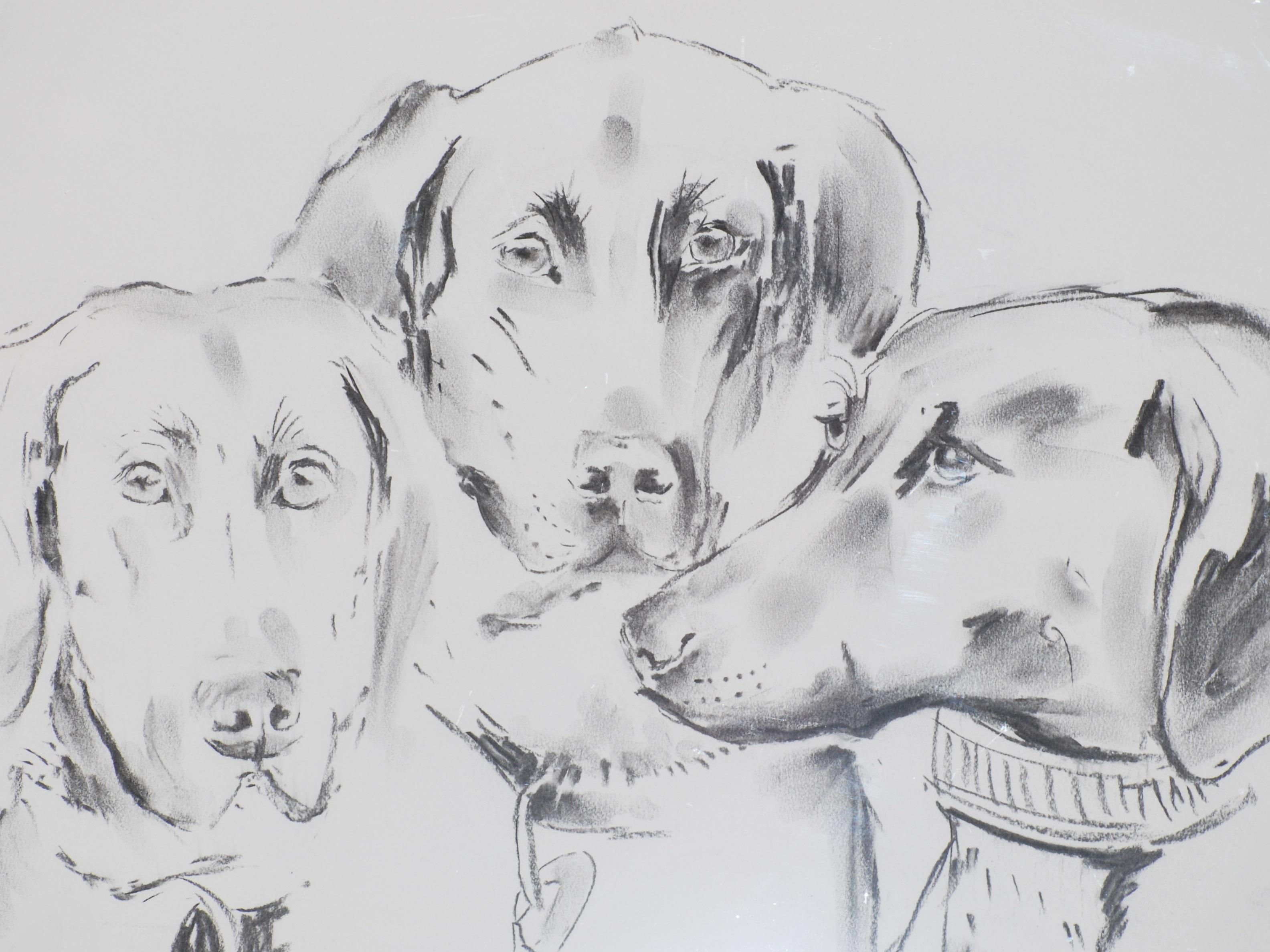 Bildnis Emma Zoe Atosha Unsere Hunde
